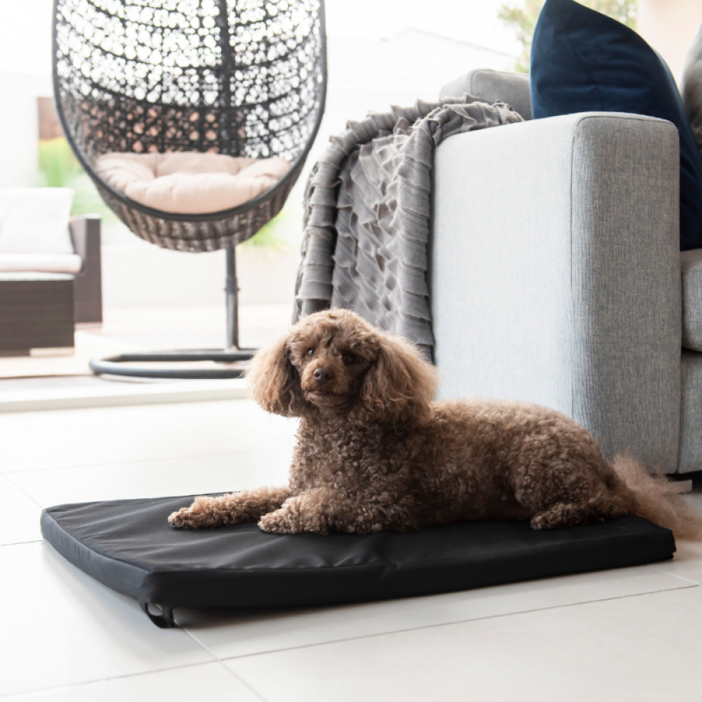 Carpet Dog Mat
